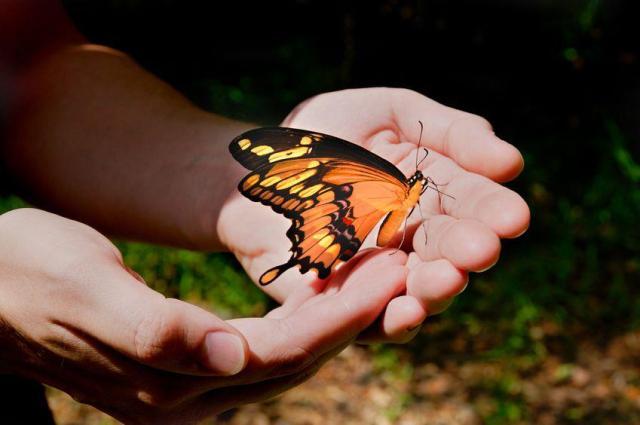 mariposa_manos